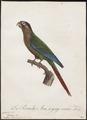 Conurus pictus - 1796-1808 - Print - Iconographia Zoologica - Special Collections University of Amsterdam - UBA01 IZ18500181.tif