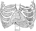 Corset1908 126Fig61.png