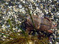Crab in tide pools.jpg