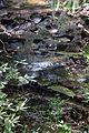 Creek at hm (5737860934).jpg