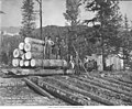 Crew with logs for construction of Alaska Central Railroad, Camp Johnston, September 17, 1905 (AL+CA 444).jpg
