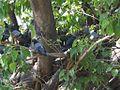 Crowded Tree (8395099026).jpg