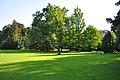 Cygnus olor - Arboretum 2010-09-03 17-18-30.JPG