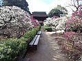 Dômyô-ji-tenman-gû Shrine - Plum Garden3.jpg