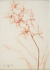 Study of an orchid branch
