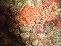 DSC00158 - recifes de coral - Naufrágio e recifes de coral no Nilo.jpg