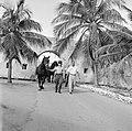 De paarden voor de koninklijke calèche in Willemstad, Bestanddeelnr 252-2739.jpg