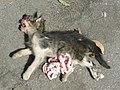 Dead cat 1380899.jpg