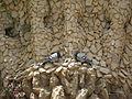 Detalle palomas viaducto.JPG