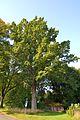 Detmold - 2014-09-04 - ND 5.10.3 Eiche (1).jpg