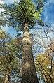 Detweiler Run Natural Area (Revisited) (13) (10545062184).jpg