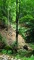 Dilijan National Park, Path way to Aghavnavank 37.jpg