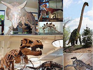 تعريف الديناصورات 300px-Dinosaurs-all.