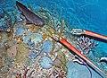 Diorama of a Devonian seafloor 6 (45573090262).jpg