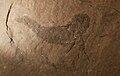 Diplacanthus 1.jpg