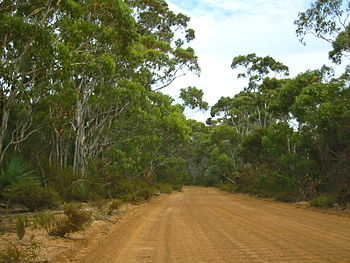 another dirt road on kangaroo island