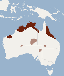Distribution of Macroderma gigas.png