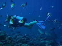 honeymoon diver killer