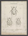 Diversen - Print - Iconographia Zoologica - Special Collections University of Amsterdam - UBAINV0274 022 06 0002.tif