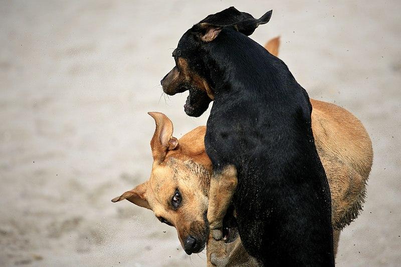 File:Dog Bite (6897422437).jpg