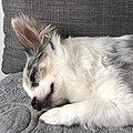 Dog sleeping on sofa.jpg