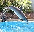 Dolphin 3 (14942562934).jpg