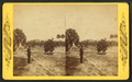 Dr. Bary's residence and grove, Enterprise, Florida, from Robert N. Dennis collection of stereoscopic views.png