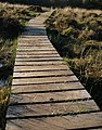 Duckboard walk, South Tawton Footpath 46 - geograph.org.uk - 989399.jpg