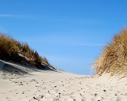 A Dutch sand dune.