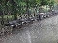 Dunavski park, spomenik prirode, Novi Sad 2.jpg
