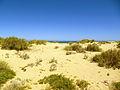 Dunes près de la mer à Exmouth.JPG