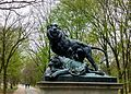 Dying lioness 2.jpg