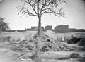 ETH-BIB-Baum und Dorf am Ufer des Niger-Tschadseeflug 1930-31-LBS MH02-08-0538.tif