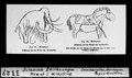 ETH-BIB-Diluviale Zeichnungen, Mamut und Wildpferd-Dia 247-03327.tif