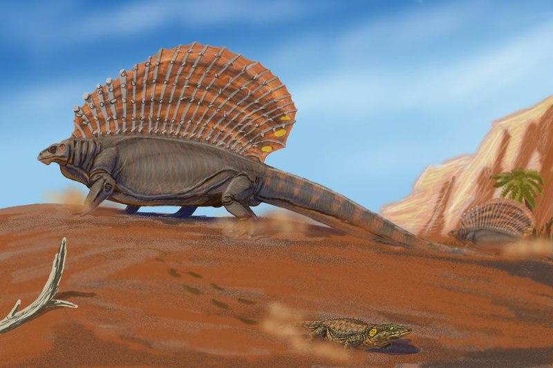http://upload.wikimedia.org/wikipedia/commons/thumb/7/7d/Edaphosaurus_pogonias.jpg/800px-Edaphosaurus_pogonias.jpg