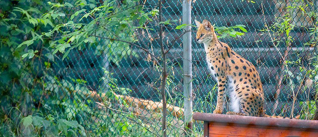 Edmonton Valley Zoo (18191577493)