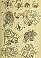 Eesti Looduseuurijate Seltsi aastaraamat (1906) (20558695053).jpg