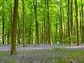 Embley Wood - geograph.org.uk - 800654.jpg