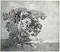Emil Carlsen - Portrait of a Tree.jpg