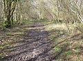 Entering Hale Wood - geograph.org.uk - 354090.jpg