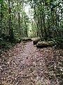 Erathna wild road.jpg