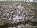 Erosion Schneeschmelze002.JPG