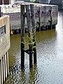 Es wächst ein Baum im Brooktorhafen - panoramio.jpg