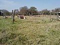 Escuela Paraje Nogues - panoramio (7).jpg