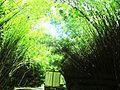 Estrada larga fechada com bambu.jpg