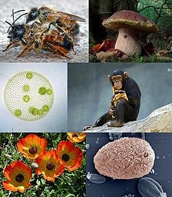 Eukaryota diversity 2.jpg
