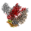 Eukaryotic RNA-polymerase II structure 1WCM.png