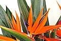 Exotic Plants (58916492).jpeg