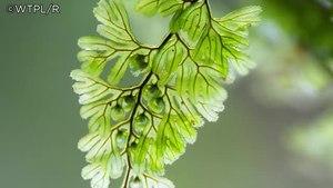 File:Expanding Llennyrch Nature Reserve.webm
