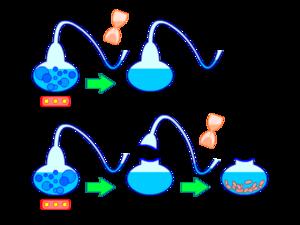 Experiment Pasteur